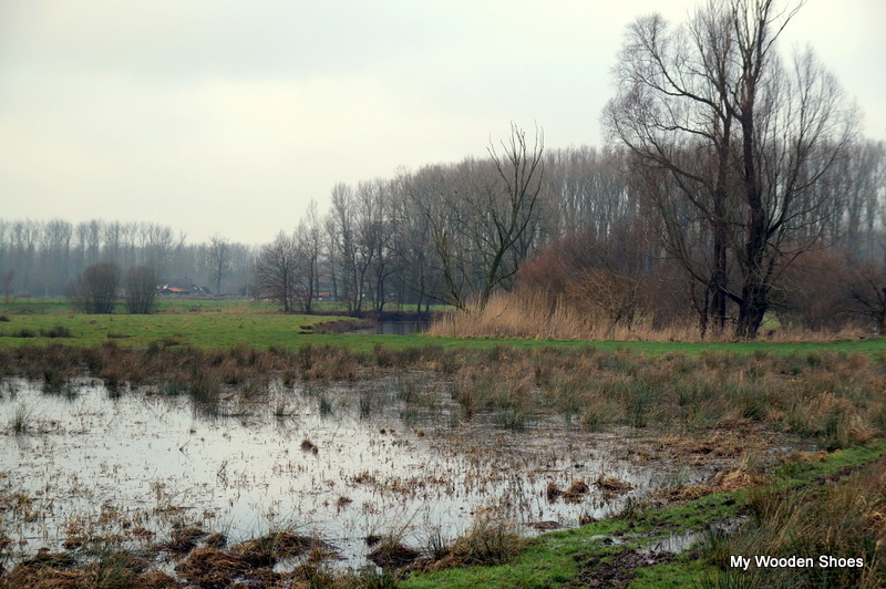 Wet grasslands bordering the Dommel stream