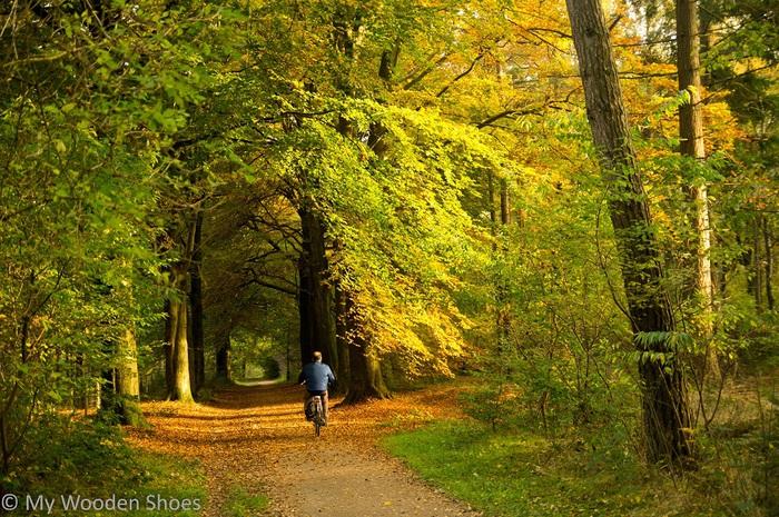 Forest hike near railway station Hollandsche Rading