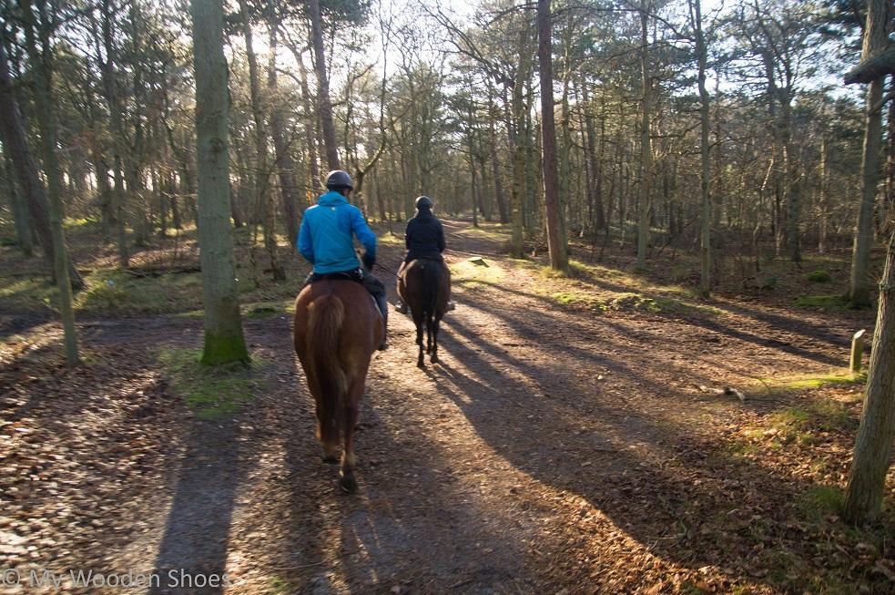 horse riding Texel